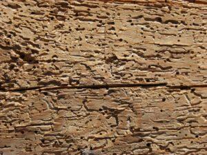 tratar madera contra termitas
