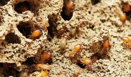 cómo eliminar termitas en Barcelona